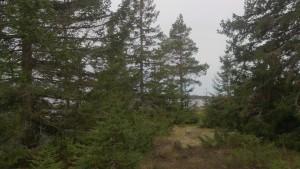 Inbjudande glänta innanför Skatagrundsudden, den sydligaste udden på Holmön.